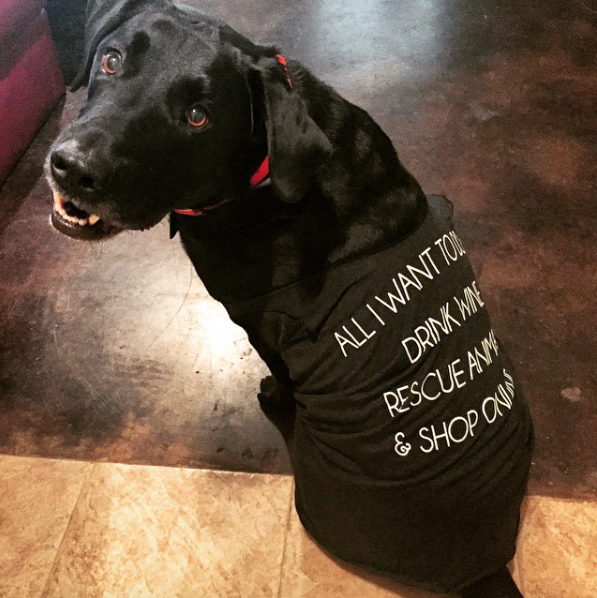 Chance the dog showing his support for shelter awareness!