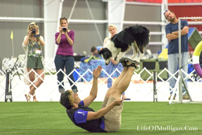 We got to tour the arena & learn about dog shows! MY FAVORITE PART was to learn that Purina adopts high energy dogs from shelters & teaches them how to become AMAZING frisbee dogs! You couldn't miss the pure joy on these dogs faces as they performed!