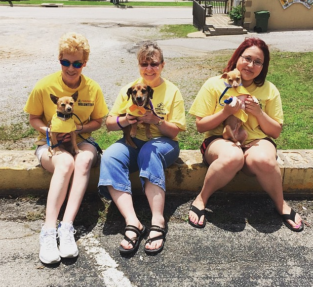 Some of the volunteers from Springdale Animal Shelter & a few of the dogs up for adoptions that came to the event!